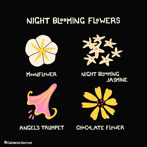 Night Blooming Flowers Illustration by Cherbear Creative Studio